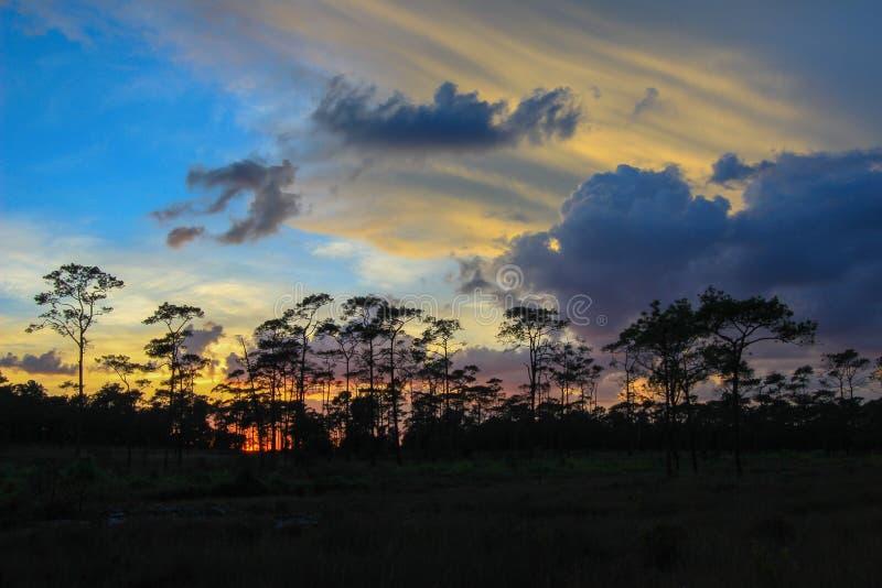 Panorama- plats av träd med solnedgångbakgrund royaltyfria foton