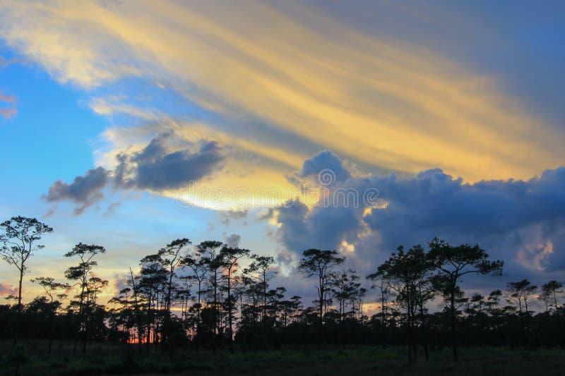 Panorama- plats av träd med solnedgångbakgrund royaltyfri foto