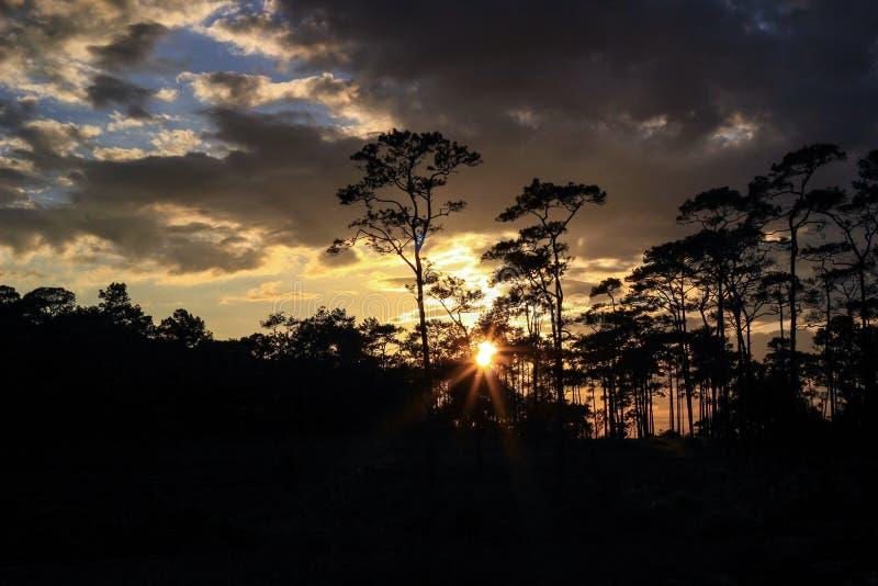 Panorama- plats av träd med solnedgångbakgrund arkivbild