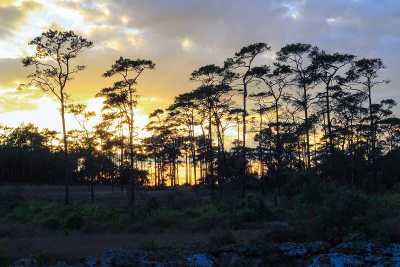 Panorama- plats av träd med solnedgångbakgrund royaltyfri fotografi