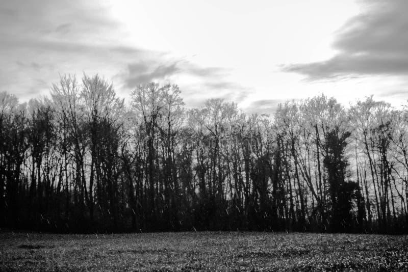Panorama pluvieux marchant dans le buisson en noir et blanc photo libre de droits