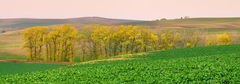 Panorama południowi Moravia jesieni pola z drzewa zdjęcie stock