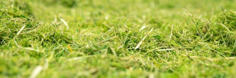 Panorama, prado cubierto de musgo y lleno de yerbajos del verde imágenes de archivo libres de regalías