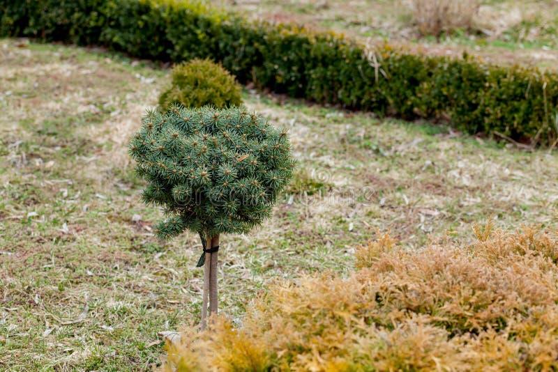 Panorama que ajardina natural en jardín Hermosa vista del jardín ajardinado en patio trasero Paisaje del área que ajardina adentr imagen de archivo