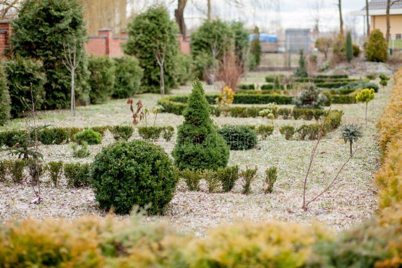 Panorama que ajardina natural en jardín Hermosa vista del jardín ajardinado en patio trasero Paisaje del área que ajardina adentr fotografía de archivo libre de regalías