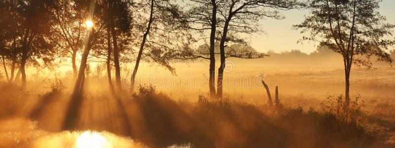 Panorama rays of the rising sun stock photography