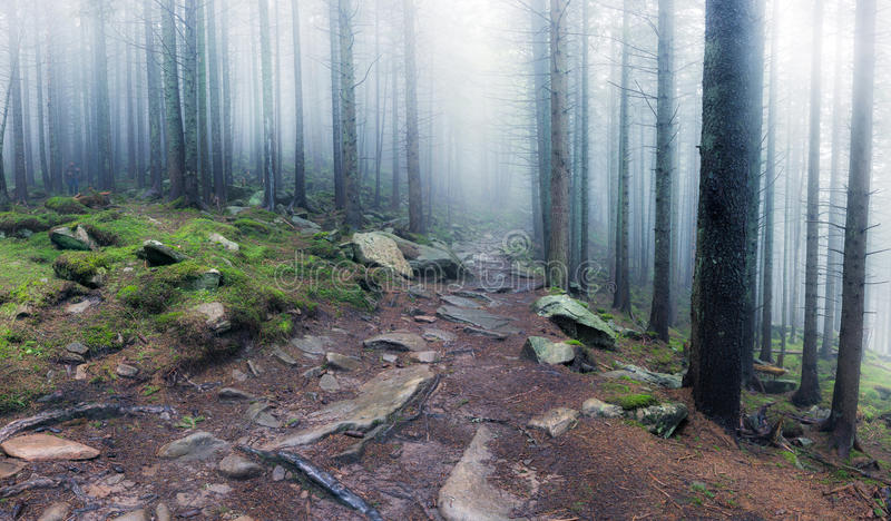 Panorama of rocky path through old foggy forest. Panorama of rocky path through old foggy dark forest royalty free stock photos