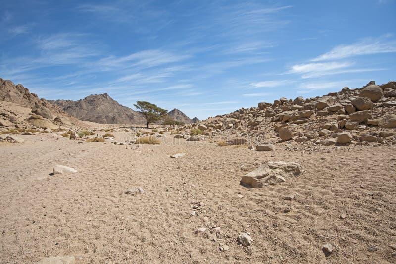 Panorama rocoso del paisaje del desierto con el crecimiento del árbol del acacia foto de archivo libre de regalías
