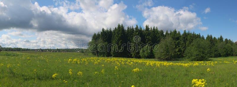 Panorama rural del verano foto de archivo