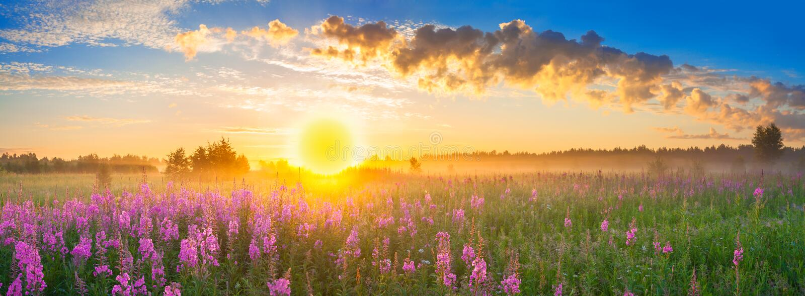 Panorama rural landscape with sunrise and blossoming meadow stock images