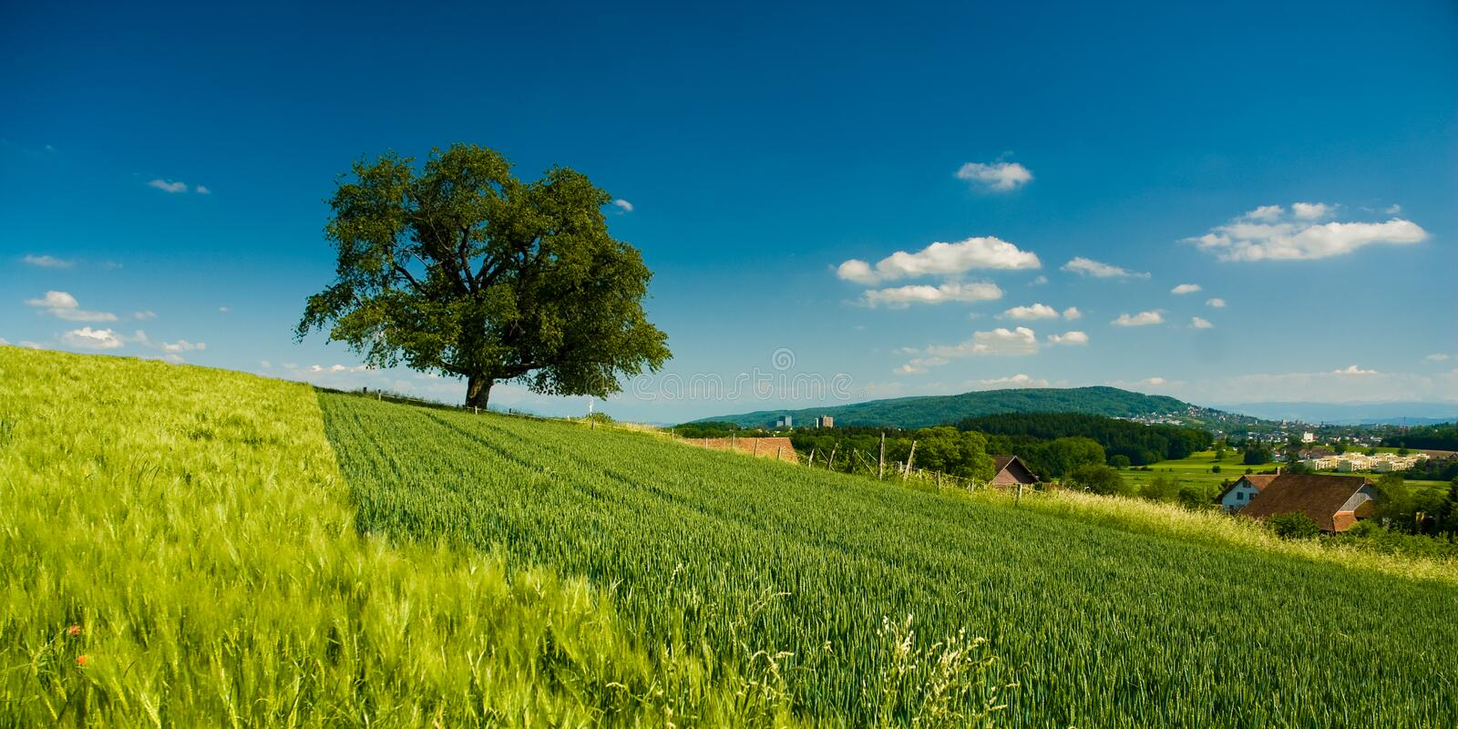 Download Panorama of rural scenery stock photo. Image of field - 7438364