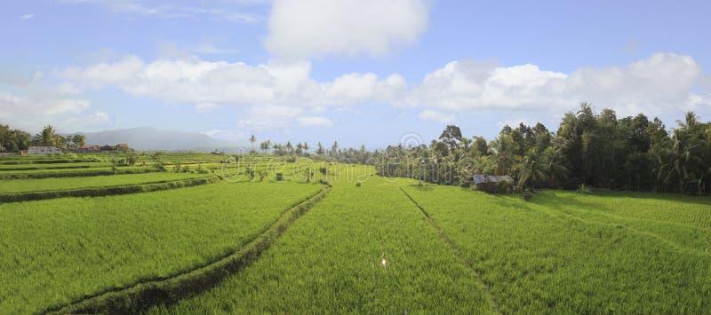 Panorama ryżowi pola fotografia stock