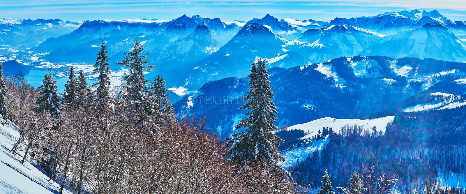 Panorama of Salzkammergut Alps from Zwolferhorn, St Gilden, Austria. Enjoy the scenic spruce forest, covered with white frost and watch fantastic Alpine stock image