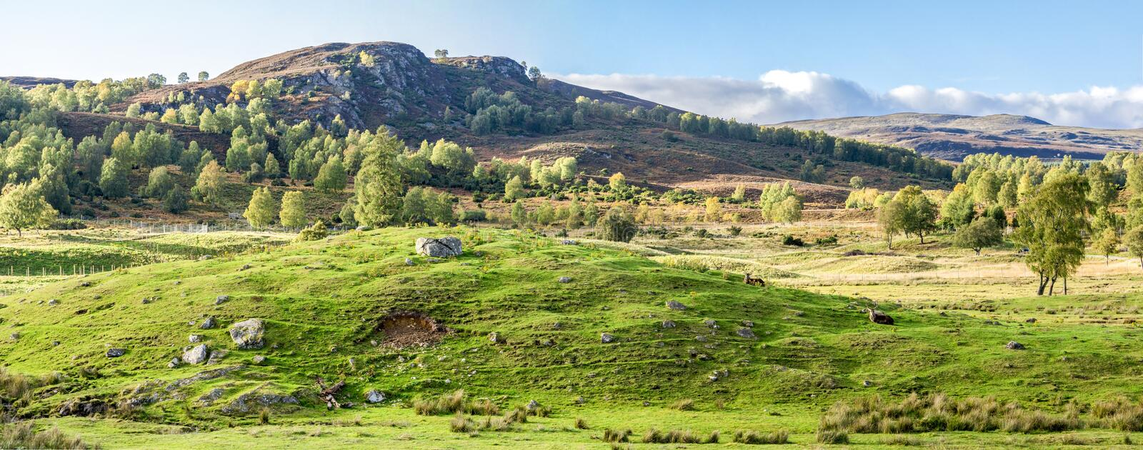 Panorama of Scottish Highlands outdoors and red deers lying down on ground, Scotland stock photos