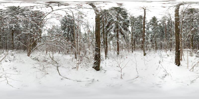 panorama sferico 3D della foresta di inverno con neve e dei pini con l'angolo di visione di 360 gradi Aspetti per realtà virtuale fotografie stock