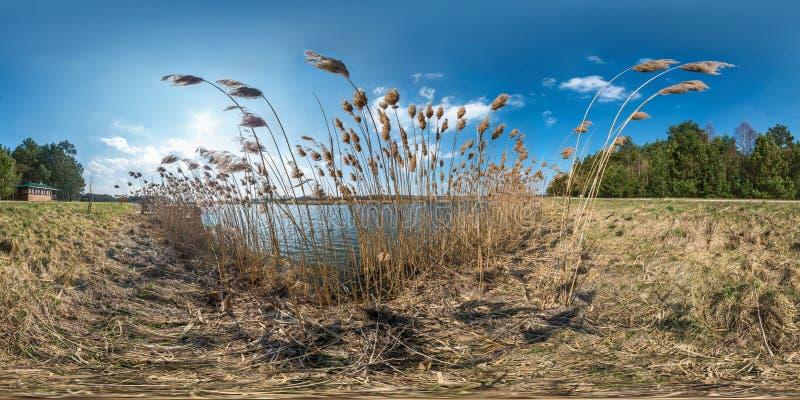 Panorama sferico di hdri senza cuciture pieno 360 gradi di vista di angolo sui boschetti delle canne vicino all'ampio lago nel gi immagini stock