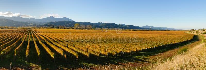 Panorama- sikt av den Wairua dalen royaltyfria foton