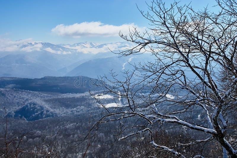 panorama- sikt för berg I förgrunden är filialer av snö-täckte träd, mot bakgrunden är en blå himmel Lago- royaltyfria bilder