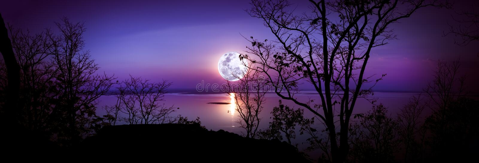 Panorama. Silhouettes of woods and beautiful moonrise, bright full moon would make a great picture. Outdoors. stock photo
