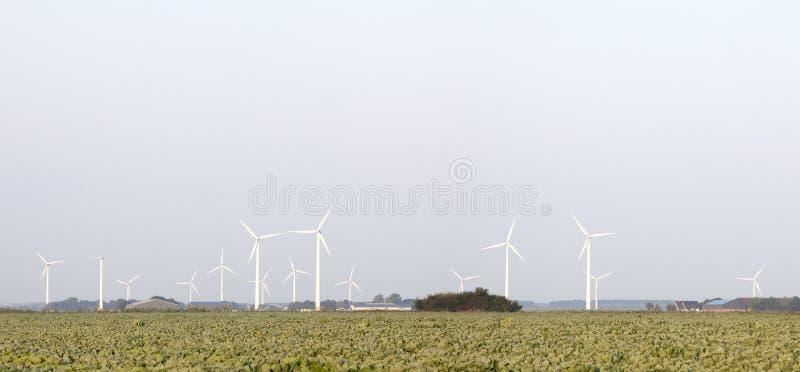 Panorama silniki wiatrowi i kapusty pole w holandiach obrazy stock