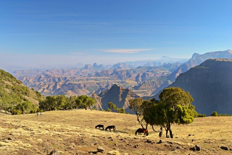 Panorama Simien berg, Etiopien royaltyfria foton