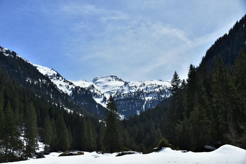 Panorama of snow and trees covered Alps from tourist path heading directly towards to Murg lakes stock photo