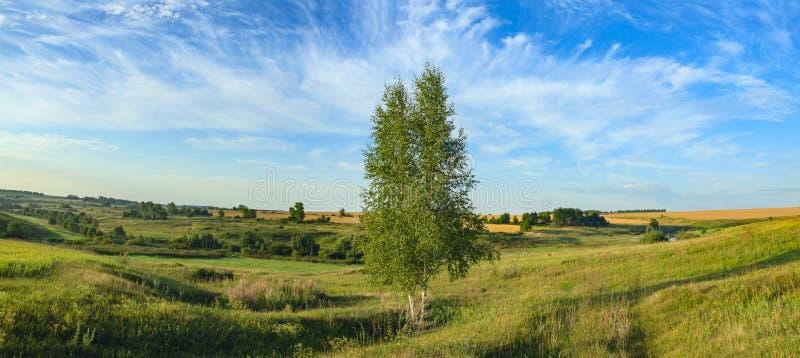 Panorama soleggiato di estate con l'albero di betulla crescente solo fotografia stock libera da diritti