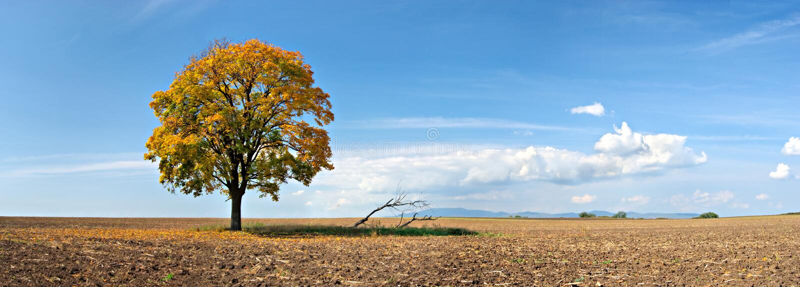 Panorama solo dell'albero fotografia stock