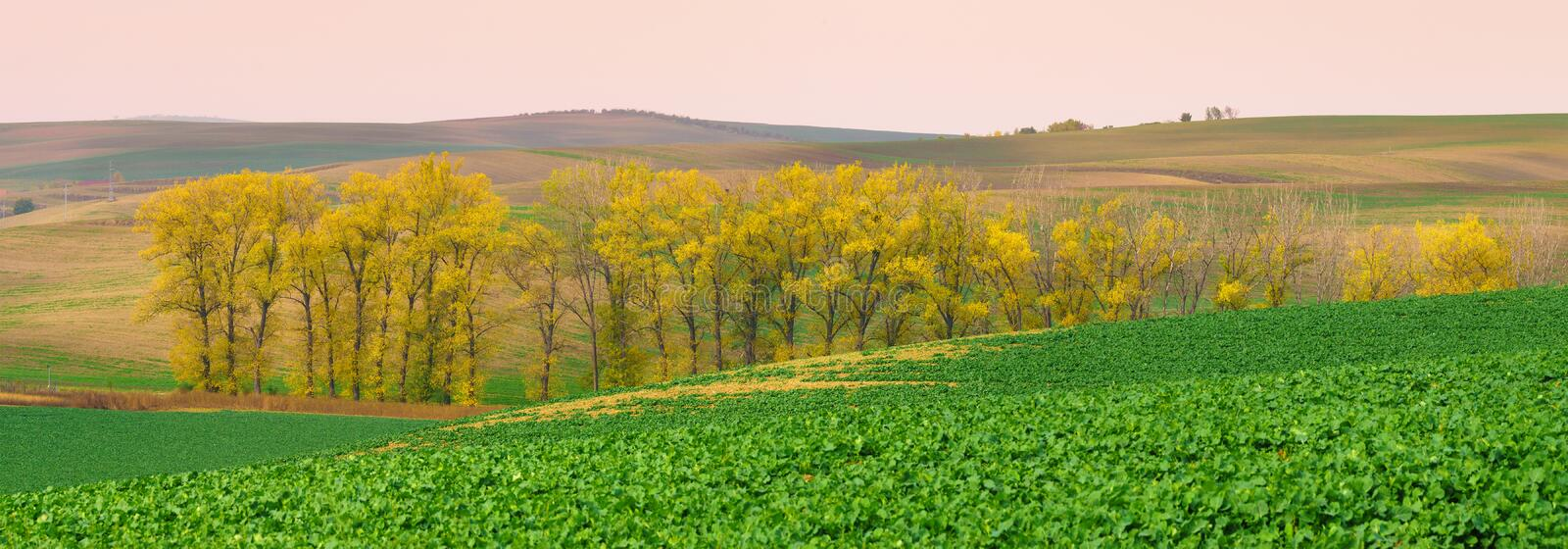 Panorama of south moravia autumn fields with a trees. Panorama of south moravia fields with a group of yellow autumn trees stock photo