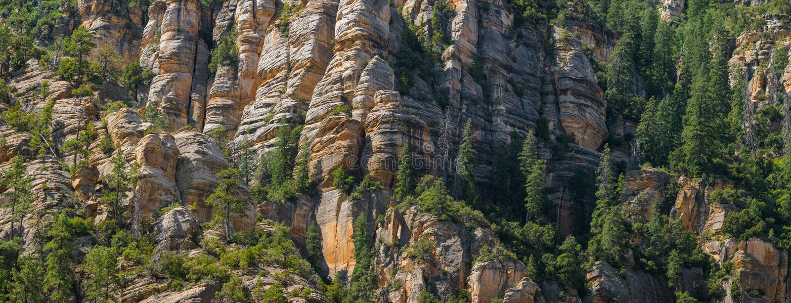 Panorama of a steep mountainside of sandstone cliffs with pine trees clinging to them. Trees cling to steep cliffs on a mountainside above Sedona, Arizona stock photo