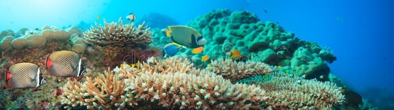 Panorama subaquático