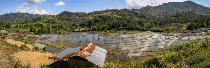 Panorama sulle risaie nella bella e campagna lussuosa intorno al Nusa Tenggara di bajawa, isola di Flores, Indonesia fotografie stock