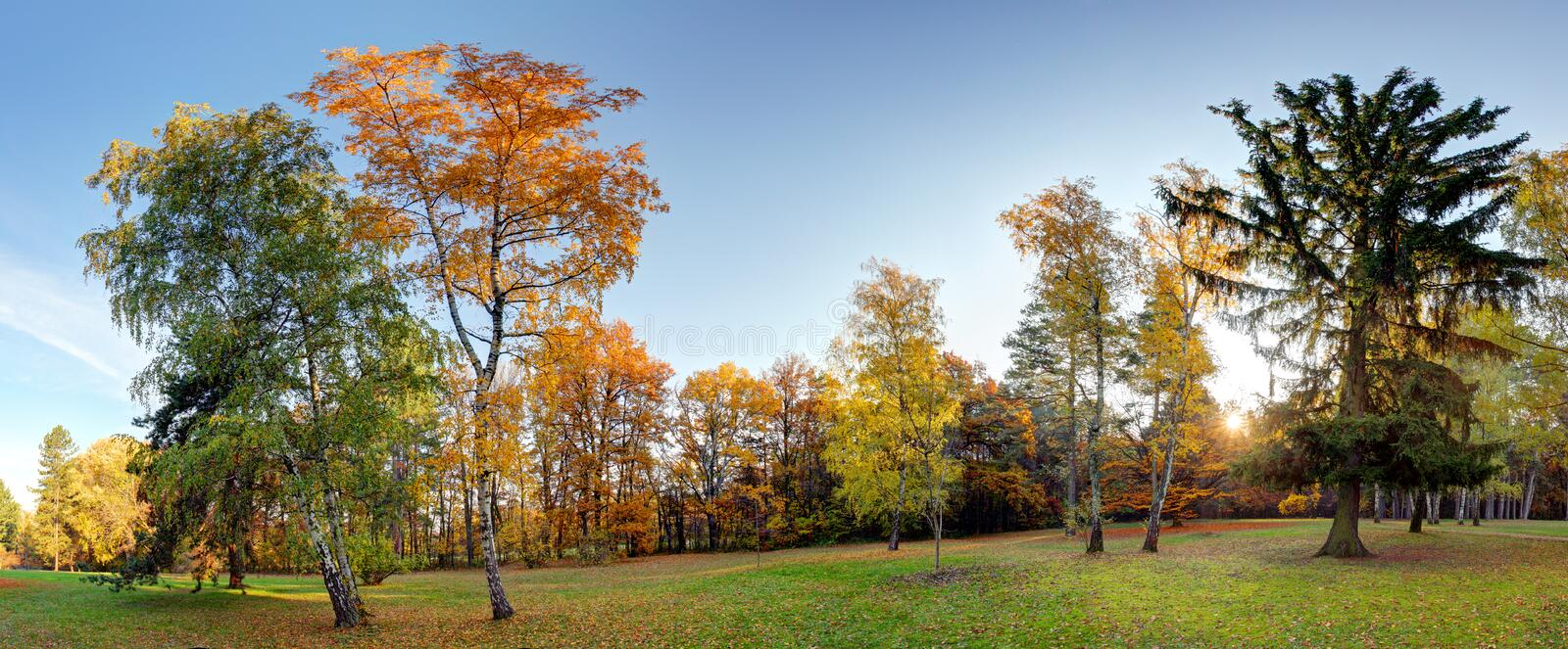 Panorama of Summer - autumn tree in forest park.  stock images