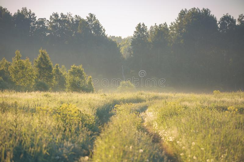 Panorama of the summer forest and fields. In the afternoon in Sunny weather royalty free stock photo