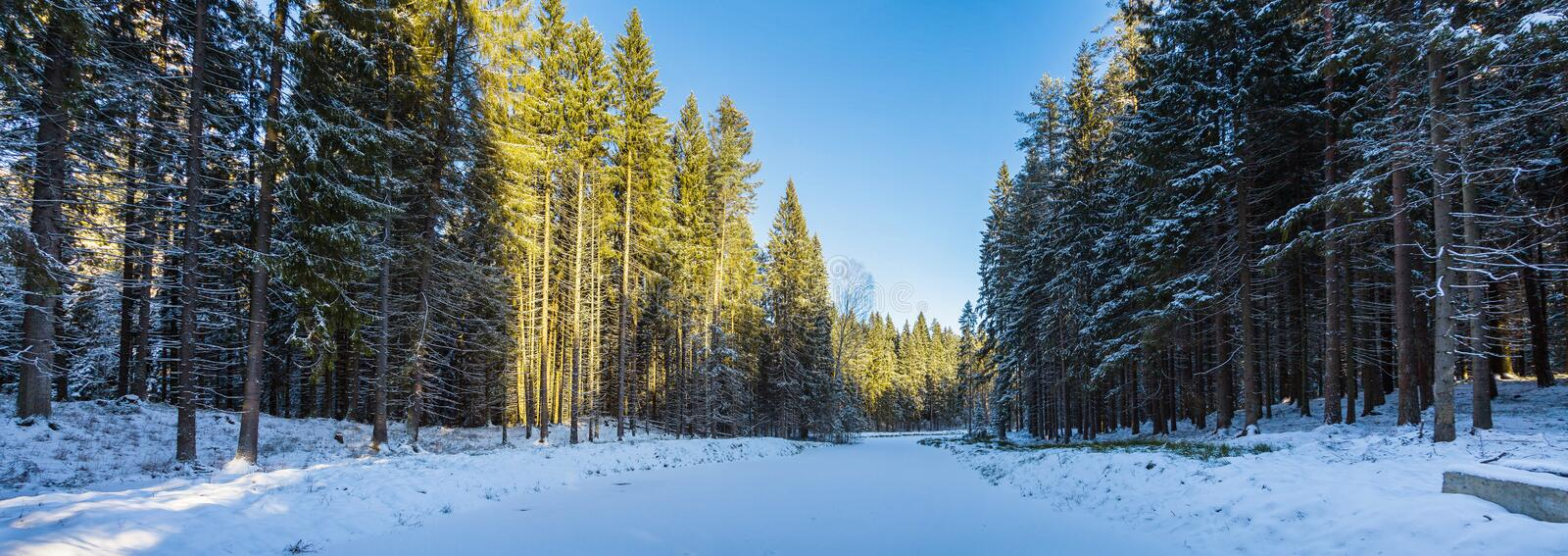 Panorama of a sunlit snow-covered forest of huge spruce   trees on both sides  of a snowy forest river.  royalty free stock photography