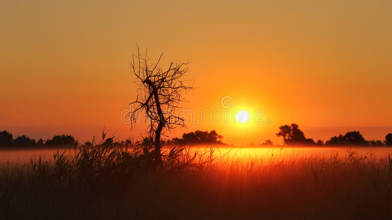 Panorama of the sunrise. The black silhouette of the dead tree and the fog over the field create a mystical picture at dawn royalty free stock image