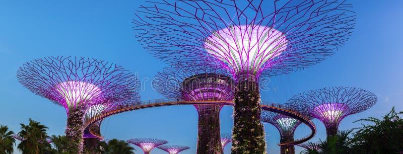 Panorama superbe de verger d'arbre, jardins par la baie, Singapour photographie stock libre de droits