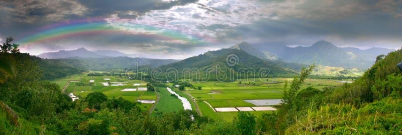 Panorama of the Taro Fields in Kauai Hawaii royalty free stock image