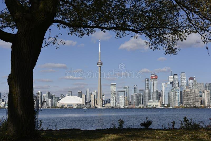 Panorama Toronto linia horyzontu nad jeziornym Ontario bellow drzewo na słonecznym dniu zdjęcia stock