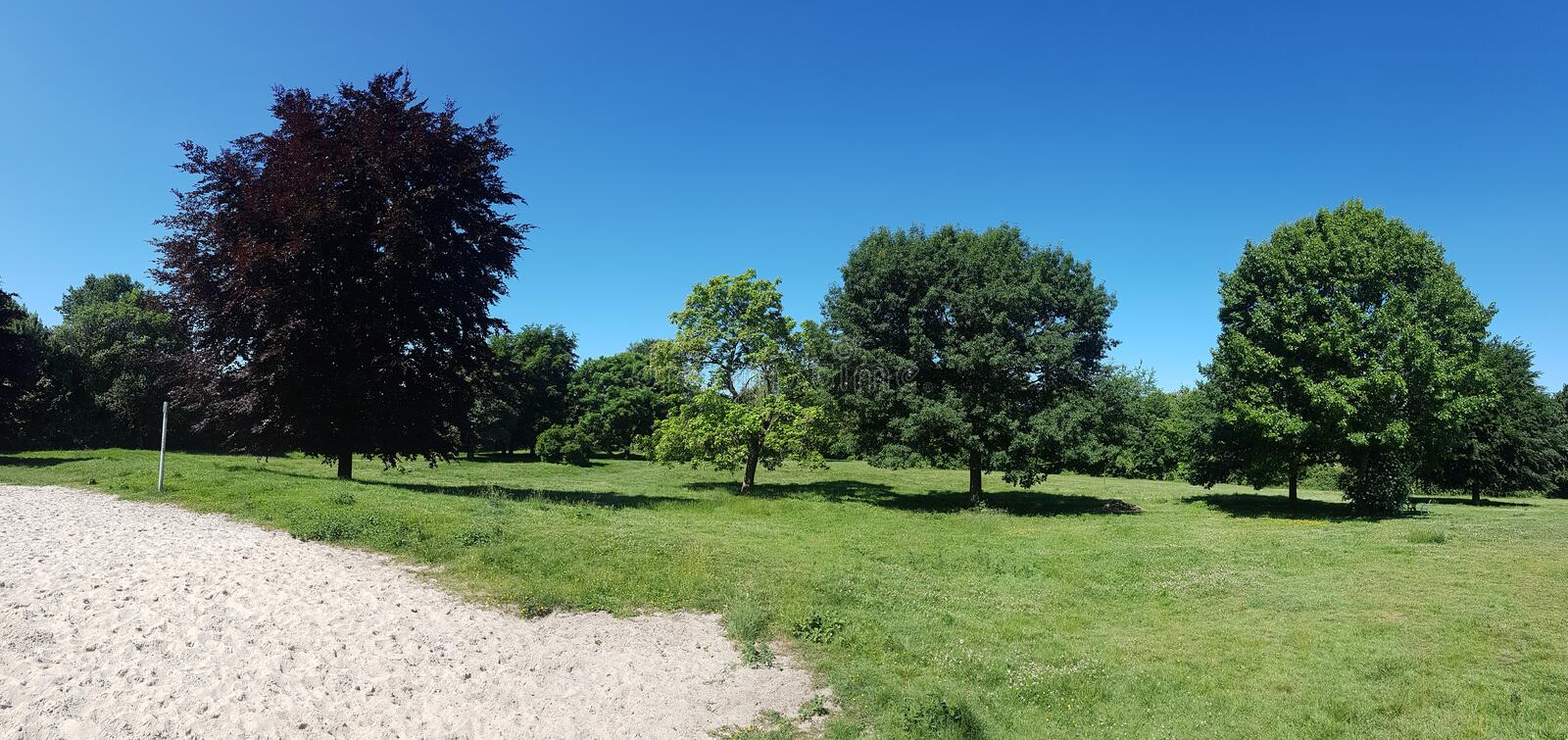 Panorama trees at dogpark royalty free stock images