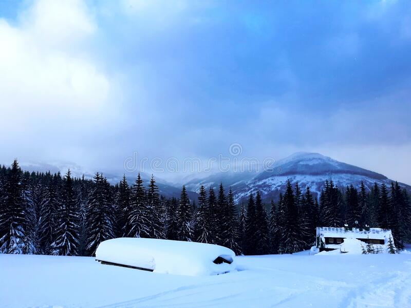 Panorama Of Trees In Snow Mountains 03 stock image