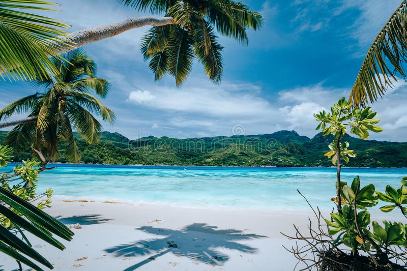 Panorama of tropical beach lush vegetation blue lagoon on bright sunny day. Vacation holidays concept. Exotic place. Paradise getaway, dream vacation royalty free stock images