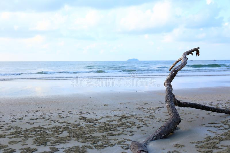 Panorama- tropisk strand med bruna filialer arkivbild