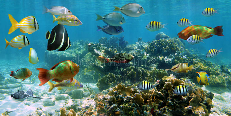Panorama in una barriera corallina con il banco dei pesci