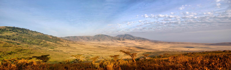 Panorama van Afrikaanse Savanne in Serengeti stock afbeelding