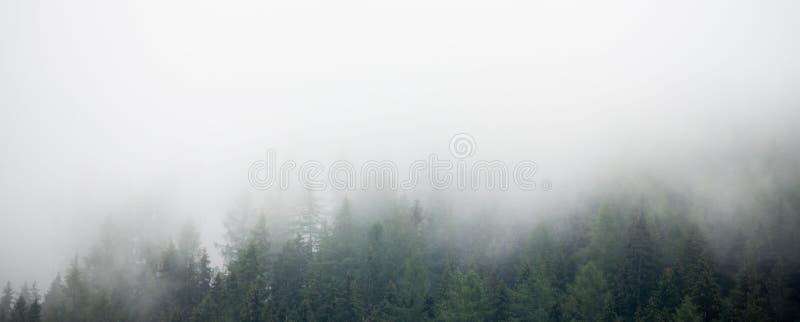 Panorama van altijdgroen bos met lage wolken royalty-vrije stock foto's