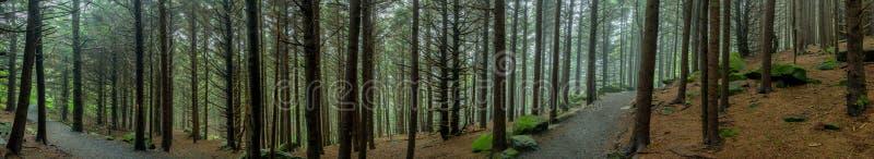 Panorama van Angstaanjagend Forest Trail royalty-vrije stock afbeelding