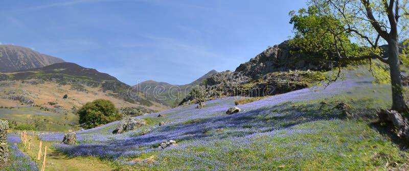 Panorama van Blauwe klokken bij de voet de bergketen van Rannerdale Knotts stock afbeeldingen