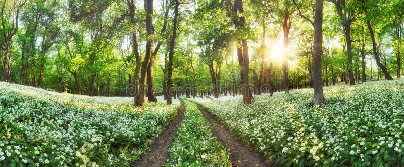 Panorama van Bos groen landschap met witte bloemen en weg stock afbeeldingen
