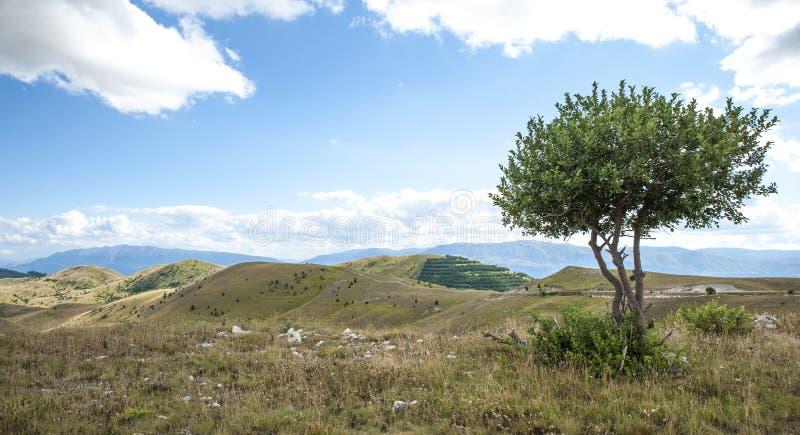 Panorama van de bergen van de Apennijnen met boom in de voorgrond Italië stock foto